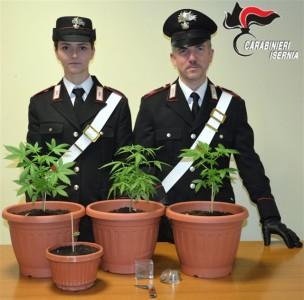 sequestro piante marijuana - 20.01.2017